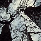 Looking up at Cottonwood 2 by sarahtakespics