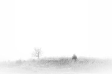 Fogged Field by Ryan Smith
