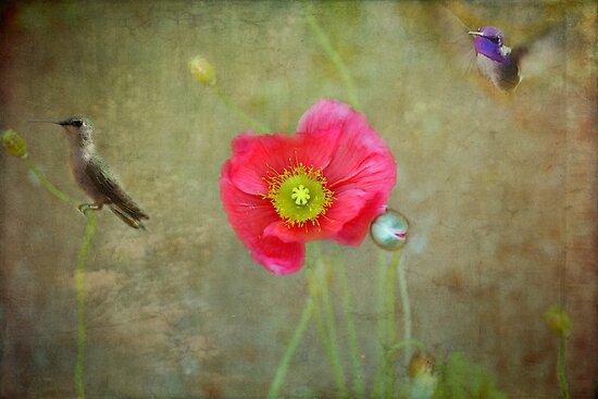 Opium Dreams by Lynn Starner