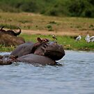 Hippos In Love by Stephen Monro