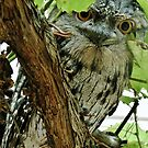 Tawny Frog Mouth by mindy23