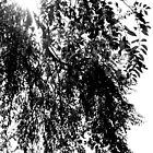 Black and White Leaves by moose2012