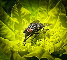 Macro Shot of a Summer Fly Sunbathing on a Yellow Perennial Garden Plant ~ Insect Photography by Chantal PhotoPix
