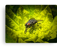 Macro Shot of a Summer Fly Sunbathing on a Yellow Perennial Garden Plant ~ Insect Photography Canvas Print