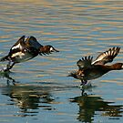 A pair of ducks. by mikepemberton