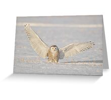 Landing Snowy Greeting Card
