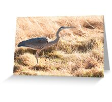 Prancing Along in the Grass Greeting Card