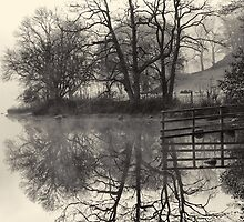 Fence Reflection by Dave Mercer