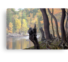 Old Roots Canvas Print