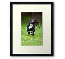 Bark 'in' Dog Framed Print