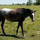 Zoe - NNEP Ottawa, ON by Tracey  Dryka