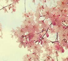 Cherry Blossom by infiniti