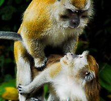 Piggy Back by Andy Yeoh