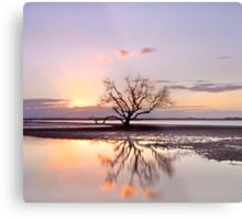 The Summer Tree - Victoria Pt Qld Australia Metal Print