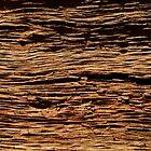 Bark Textures, 4 by tenzil