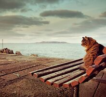 Cool cat by orourke