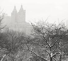 Snow Globe - Winter - Central Park - New York City by Vivienne Gucwa