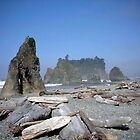 Driftwood at Ruby Beach by debidabble