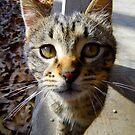 Curiosity, Said The Cat by WildestArt