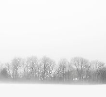 Veiled Tree Line by David Lamb