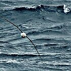 Wandering Albatross at sea in Southern Ocean by Crispel