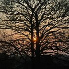 Tree at Sunrise by Crispel