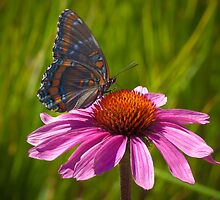 Butterfly by Kwame Johnson