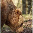 Gentle Giant by marktc