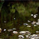 Mulgrave River Rocks by Chris Cohen