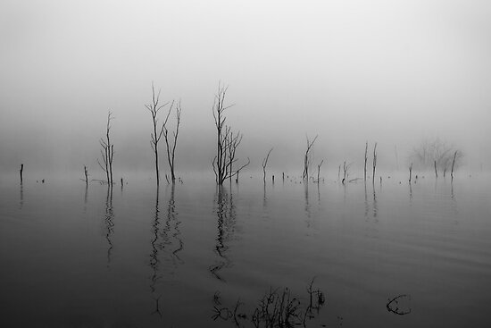 Fog on the Lake by dlhedberg