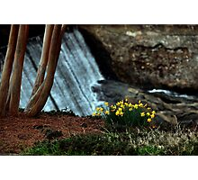 Here Comes Spring Photographic Print