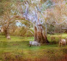 Grazing in the Green - Mount Pleasant, South Australia by Mark Richards