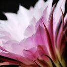 Cactus flower by Terri-Anne Kingsley