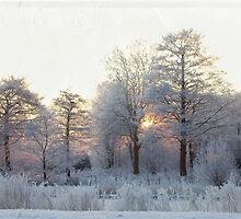 The first morning after the first snow... by steppeland