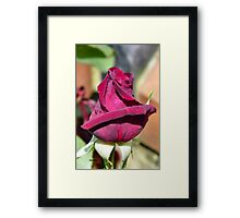 A Rose for Valentines Framed Print