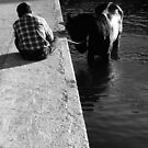 Cooling a horse in the port of Gozo (Malta) by M. van Oostrum