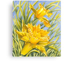 Daffy-down-Dilly Canvas Print