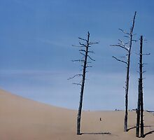 TREES AND DUNE by Scott  Shaver