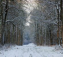 Winter Woods by JPassmore