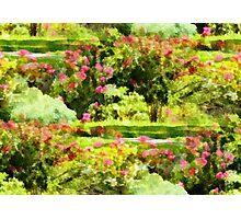 Victorian Garden Photographic Print