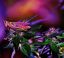 Grass-Hopper by Marsha Ambrose