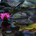 Lotus by Lisa Bianchi