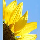 Sunflower by VenusOak