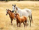 Jessie , Tanner and Jazz  by Trudi's Images