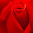 Red, Red Rose by Judi Mowlem