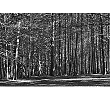 January Light In Woods Above The Pacific Photographic Print