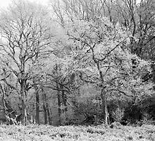 Frost on Trees in Black and White by Natalie Kinnear