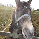 kingswood/surrey/horse in field -(010212)- digital photo by paulramnora