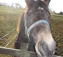 kingswood/surrey/horse in field -(010212)- digital photo by paulramnora