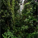 Mamu Rainforest Walk 2 by Chris Cohen